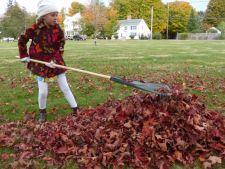 Beneficiile mulcirii cu frunzele de toamna
