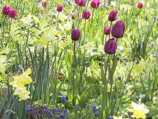 5 combinatii spectaculoase de flori cu bulbi