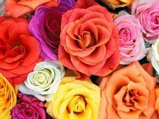Top 8 cei mai parfumati trandafiri