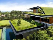 Tu stii ce este un acoperis viu? 7 beneficii care te-ar putea surprinde!