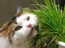 6 plante benefice pentru sanatatea pisicii