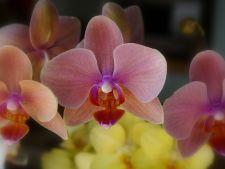 6 plante de interior care infloresc in sezonul rece