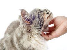 De ce este bine sa-ti masezi pisica frecvent?