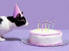 6 idei simpatice pentru a sarbatori ziua pisicii