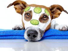 Tratamente naturiste la indemana pentru cele mai frecvente afectiuni ale cainilor