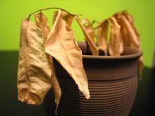 Cum sa salvezi o planta care este pe moarte