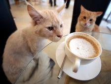 Cele mai cool cafenele din lume