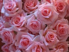 5 plante te interior care atrag dragostea, bucuria si prosperitatea