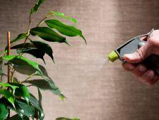 4 sfaturi esentiale pentru a muta in siguranta plantele din gradina in casa
