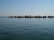Marea Neagra este din nou curata: au aparut specii de pesti disparute acum 50 de ani