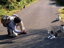 4 destinatii in care pisicile sunt adevarate atractii turistice