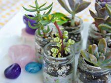 Tendinte plante de apartament 2014: ce specii si accesorii sunt in top anul viitor