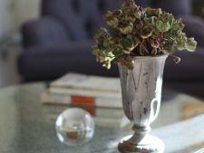 Cum sa faci un buchet din plante suculente care rezista fara apa