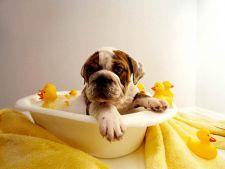 Imbaierea cainilor si pisicilor: 5 sfaturi pentru mai multa relaxare si distractie in baie