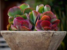 4 plante de apartament cu aspect ciudat, potrivite pentru nonconformisti