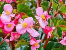 7  plante pentru cele mai frumoase gradini verticale