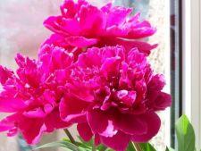 Flori Feng Shui: o ponturi care aduc norocul la tine acasa!