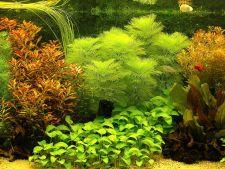 Decoruri superbe cu plante subacvatice, premiate in 2013