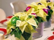 Cum decorezi plantele de apartament pentru sarbatorile de iarna