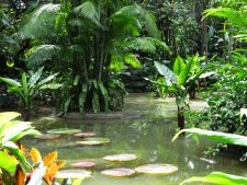 Gradina Botanica din Singapore, un loc unic in lume
