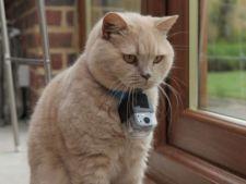 Pisicile au de acum un hotel de lux dedicat lor