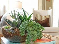 Gradina de interior: idei de crestere a celor mai aspectuoase plante in casa