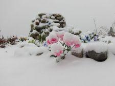 Plantele si florile artificiale, o alegere isteata pentru gradina de iarna