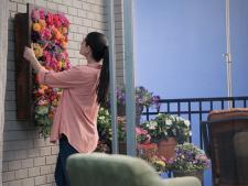 6 cele mai bune plante pentru o gradina verticala usor de intretinut