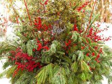 Ghivecele cu plante colorate, o alternativa inedita pentru decorul gradinii de Craciun