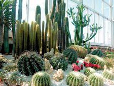 Exista plante care atrag energii Feng Shui negative?