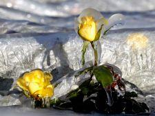 Cum iti protejezi plantele in sezonul rece
