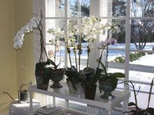 Plantele exotice si ingrijirea adecvata in sezonul rece
