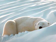 6 curiozitati despre hibernarea animalelor