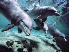 Stiai ca delfinii se drogheaza? Afla ce rol au pestii in acest proces!