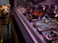 Primul restaurant pentru caini si pisici, deschis la Berlin