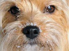 Cum iti protejezi animalul de companie pe timpul iernii