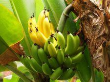 Cojile de banane, o minune pentru gradina ta. Iata cum le poti folosi