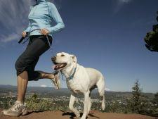 Ai nevoie de un partener de jogging? 5 rase de caini care tin pasul cu tine