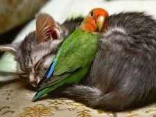 Din ce in ce mai multi oameni isi includ animalele de companie in testamente