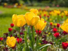 5 procese care te ajuta sa ai paturi de flori colorate superbe in gradina