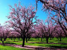 Cum recunosti copacii dupa flori