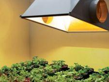 Cum sa sporesti lumina naturala pentru plantele de interior