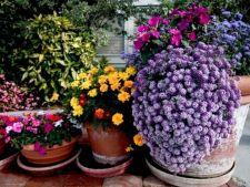 Cum sa alegi ghivecele in functie de plante