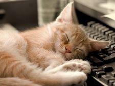 Pisici adepte ale stilului Garfield. Cele mai lenese rase de feline