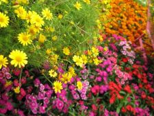 5 flori spectaculoase care iti vor infrumuseta gradina in aceasta vara