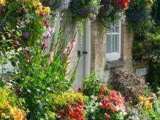 Cosurile cu flori suspendate, o noua maniera de gradinarit in spatii mici