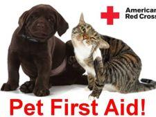 Aplicatia care ii salveaza viata cainelui sau pisicii tale