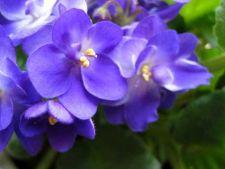 5 plante Feng-Shui care iti pot schimba viata