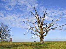 6 semne prin care iti poti da seama ca un copac este pe moarte