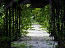 Gradina misterelor: ce-ti trebuie pentru a realiza planul unei gradini captivante acasa